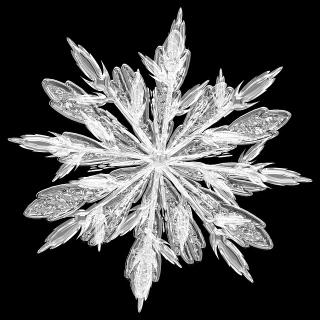 Weniger Frostschäden durch Proteine