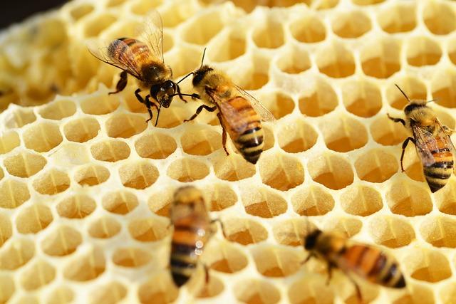 Bienenwaben - Quelle: Pixabay
