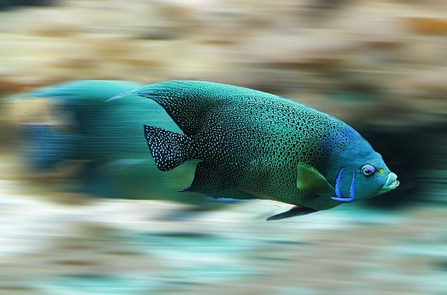 Fisch - Quelle: Pixabay