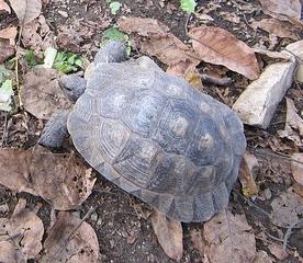 Schildkröte, ©Daniela Dreuth