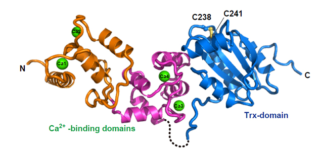 "Das Protein ""Calredoxin"", Quelle: WWU / AG Hippler"