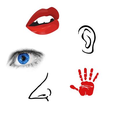 Die fünf Sinne des Menschen: Hören, Fühlen, Riechen, Sehen und Schmecken