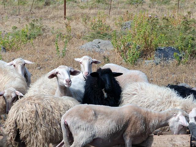 Die Herdenimmunität schützt auch nicht geimpfte in einer Gruppe - Quelle: Pixabay