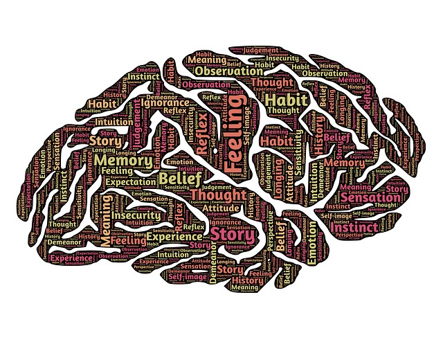 Gehirn - Quelle: Pixabay