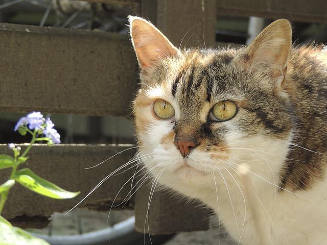 Schnurrhaare einer Katze sind ein wichtiges Sinnesorgan - Quelle: Pixabay