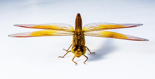 Libelle - Quelle: Pixabay