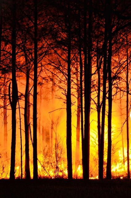 Waldbrand, Quelle: Pixabay