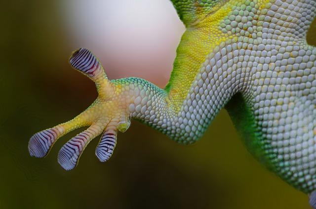 Gecko-Pfote - Quelle: Pixabay