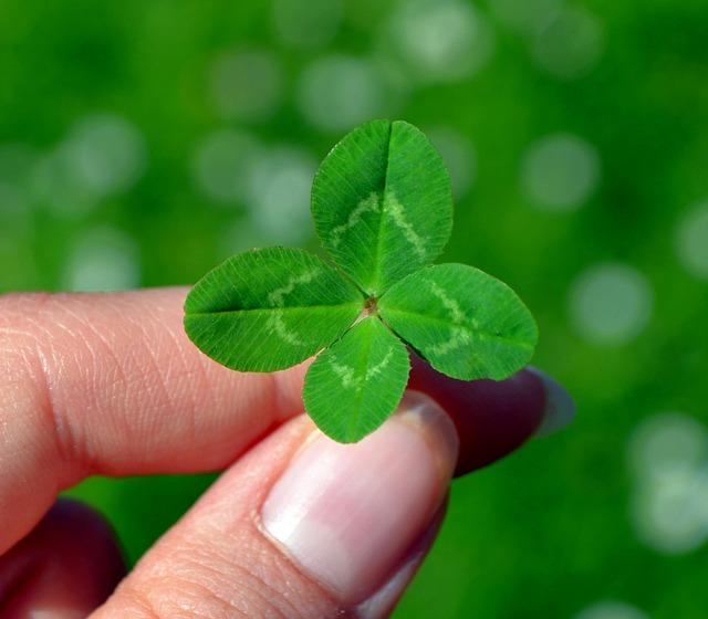 Ein vierblättriges Kleeblatt = Glück - Quelle: Pixabay