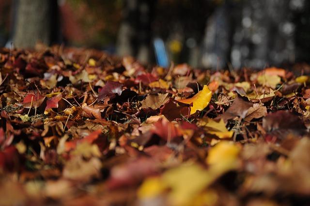 Laubspiele im Herbst und Winter, Quelle: Pixabay