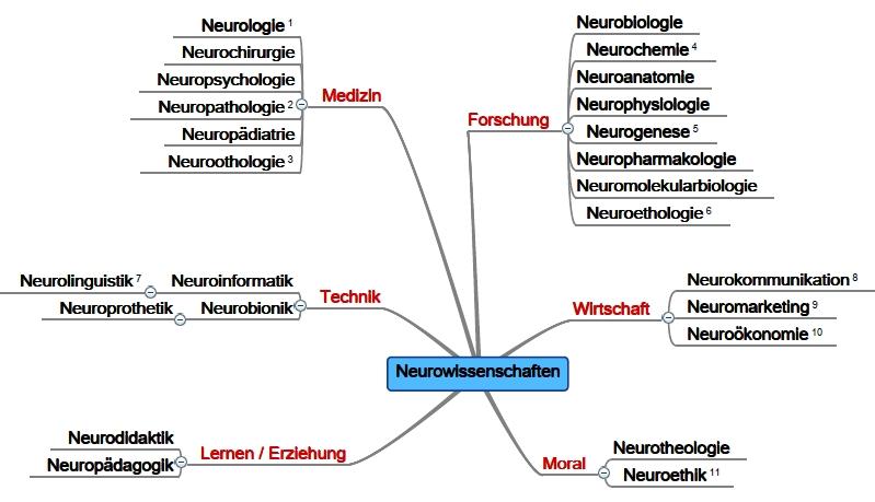 Mindmap: Teilgebiete der Neurowissenschaften ©Martina Rüter