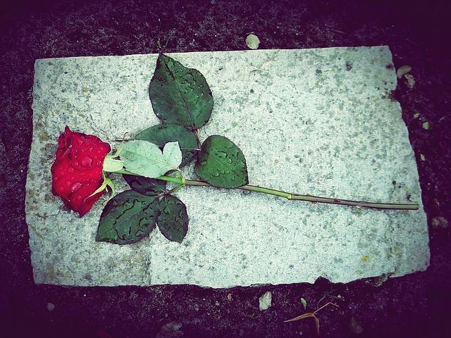 Eine rote Rose als Symbol der Liebe zu dem Verstorbenen - Quelle: Pixabay