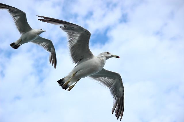 Aufgefächerte Flügelspitzen erzeugen Luftverwirbelungen - Quelle: Pixabay