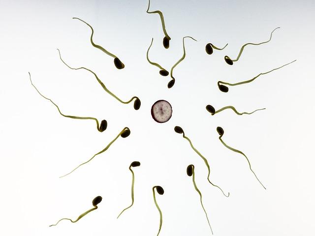 Befruchtung einer Eizelle durch ein Spermium - Quelle: Pixabay
