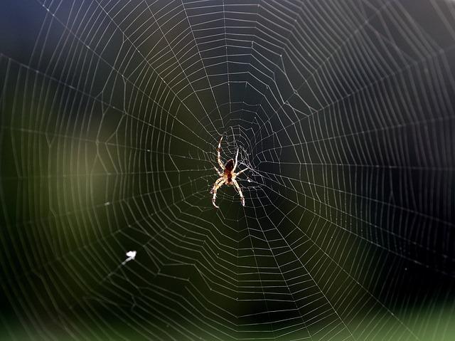 Spinne im Netz - Quelle: PIxabay
