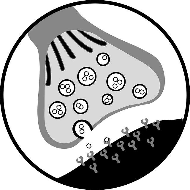 Informationsübertragung an chemischen Synapsen - Quelle: Pixabay
