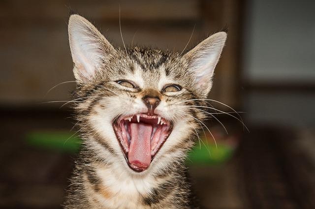 Katzengebiss - Quelle: Pixabay