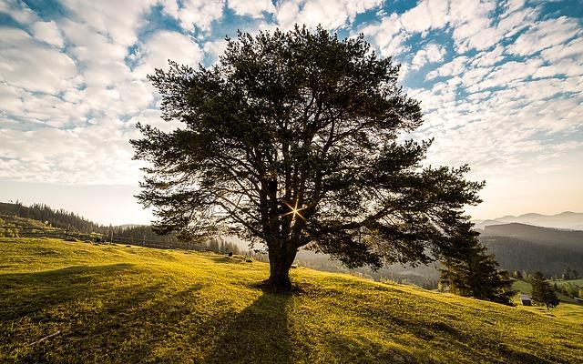 Ein Baum gewinnt durch die Photosynthese Energie zum Leben - Quelle: Pixabay